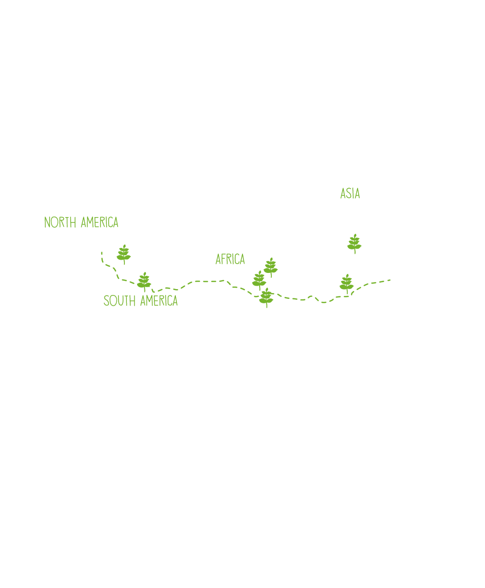 ONE MILLION FARMERS NORTH AMERICA SOUTH AMERICA AFRICA ASIA MILLIONS MORE COFFEE TREES ©Conservation International