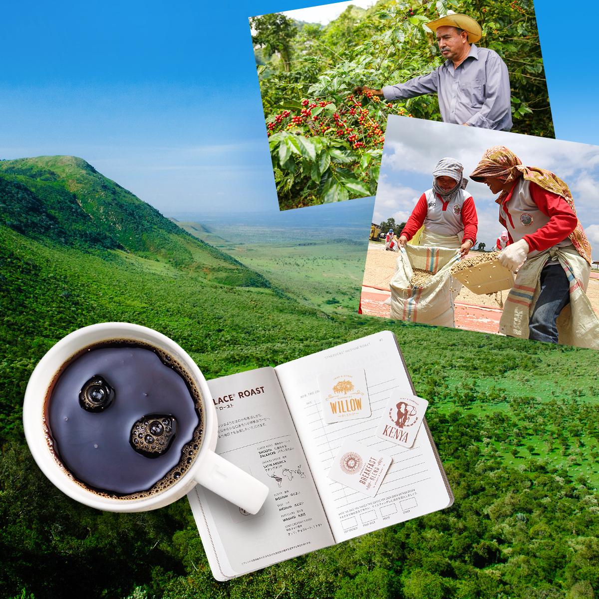 [季節のコーヒー] 個性豊かな生産地に想いをはせる、夏のコーヒージャーニーへ